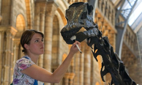 Helen Walker cleans Dippy
