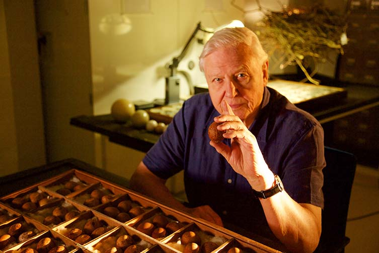 Sir David Attenborough holding a peregrine falcon egg