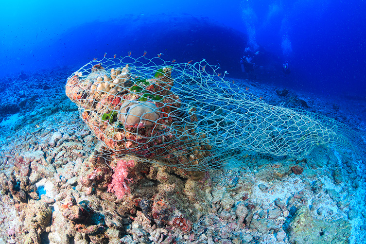 A ghost net wrapped around some colourful coral. These can often entangle whales and dolphins, collectively known as cetaceans.