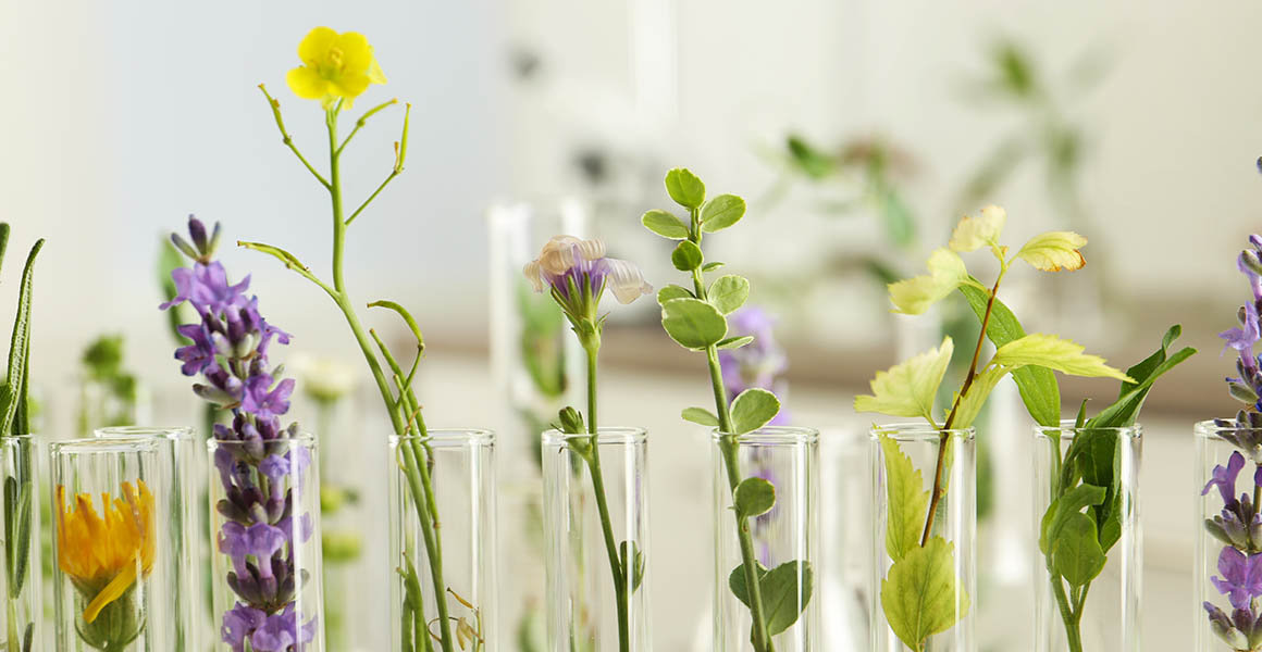 Aspirin, morphine and chemotherapy: the essential medicines powered by plants