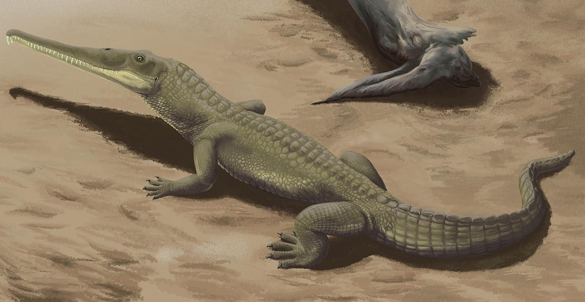First fossils of crocodile-like phytosaurs from southern Africa