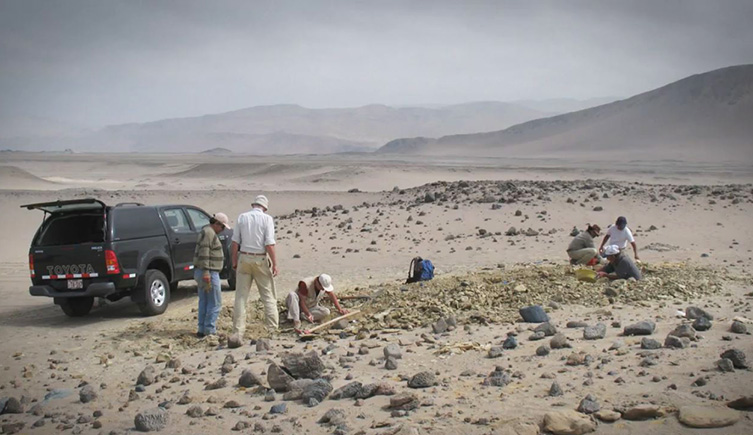 Palaeontologists searching for ancient whale fossils in Peru