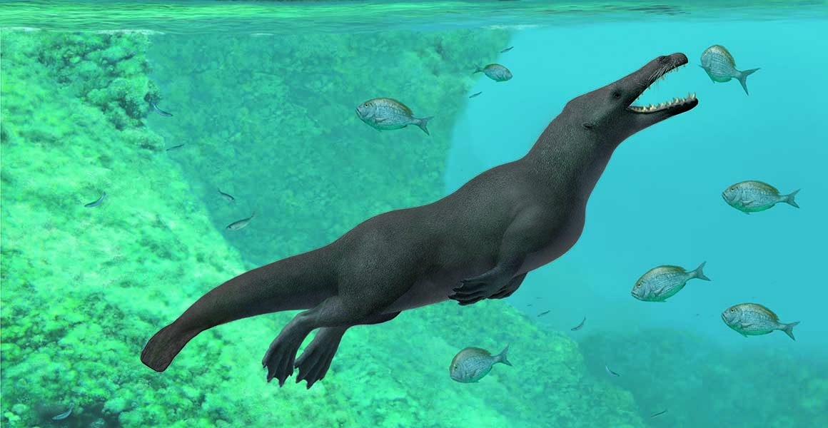 Reconstruction of the ancient whale with four legs