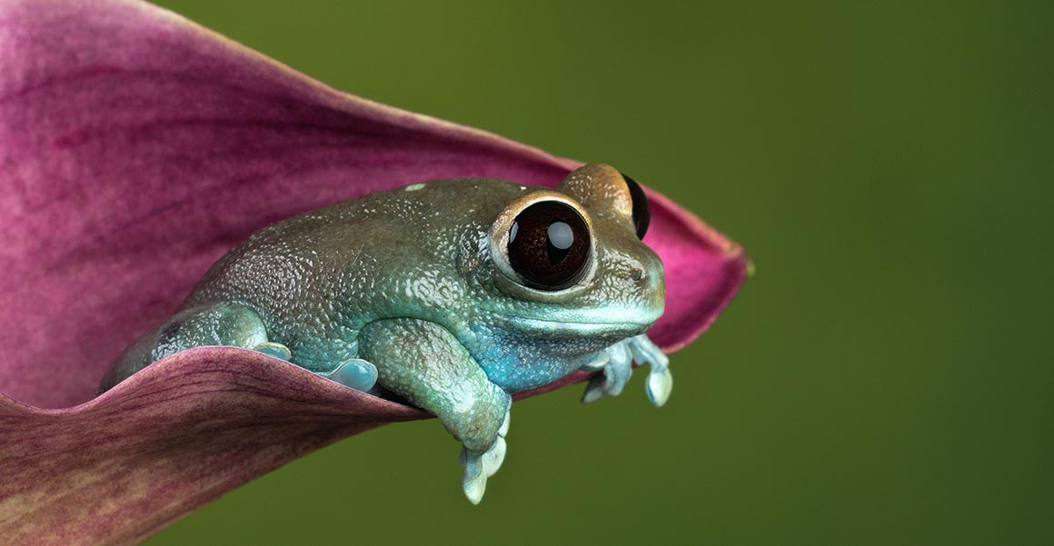 Frogs have some of the biggest eyes amongst vertebrates