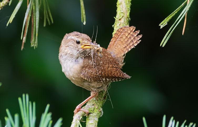British garden birds: spring and summer highlights | Natural