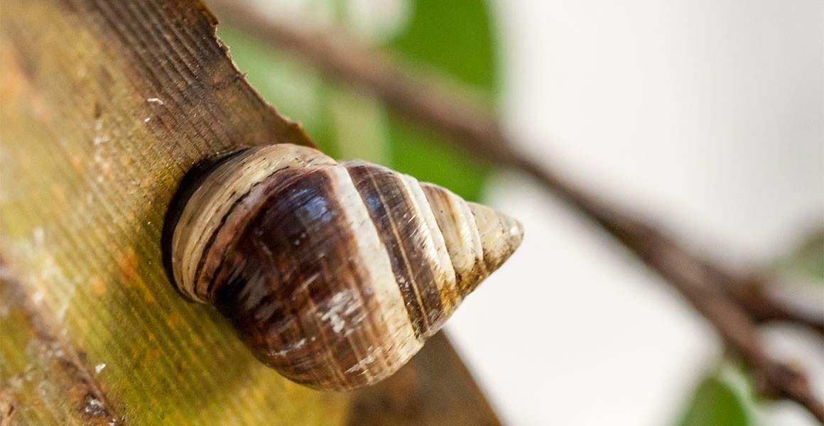 Death of George the tree snail marked the first extinction