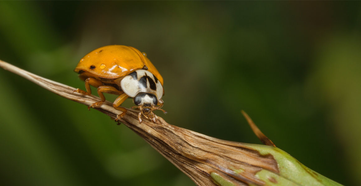 A ladybird rests on a leaf