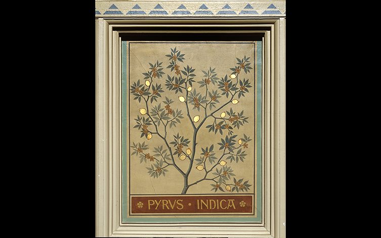 A panel featuring the Indian pear