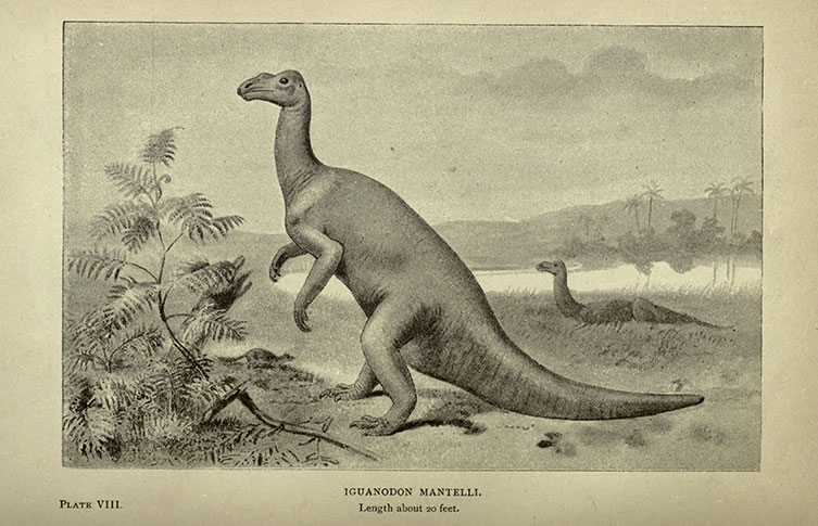 Illustration of Iguanodon mantelli in a kangeroo-like stance