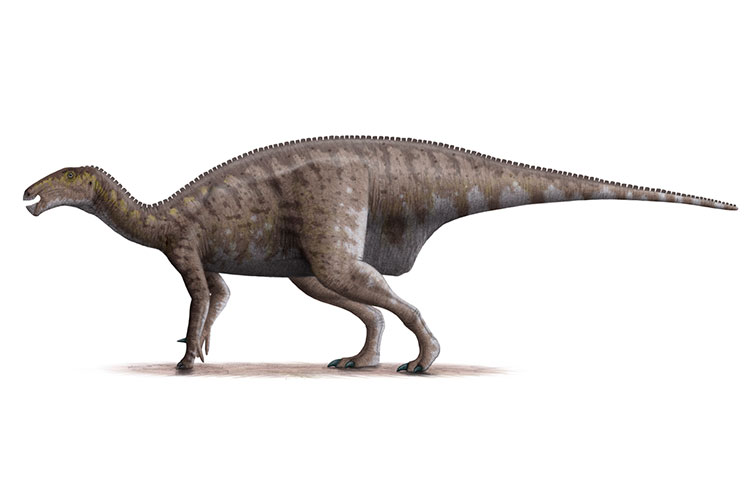 Illustration of Mantellisaurus