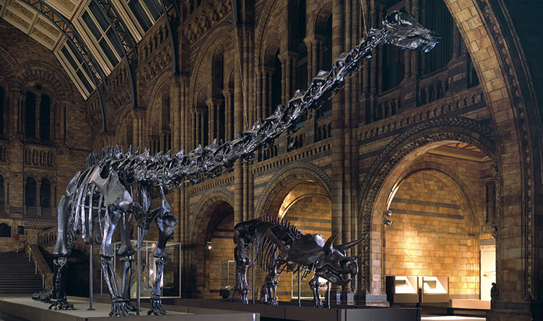 Diplodocus and Triceratops in 1979