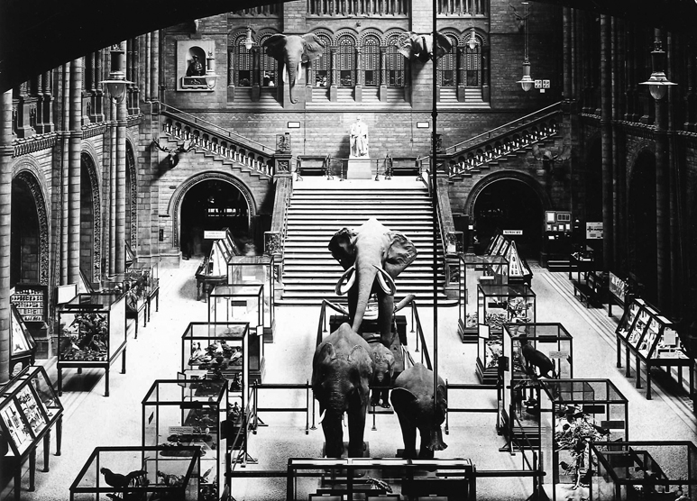 historical-picture-elephants-037675