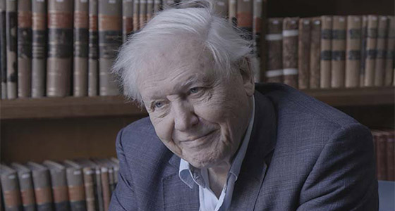 A portrait of David Attenborough