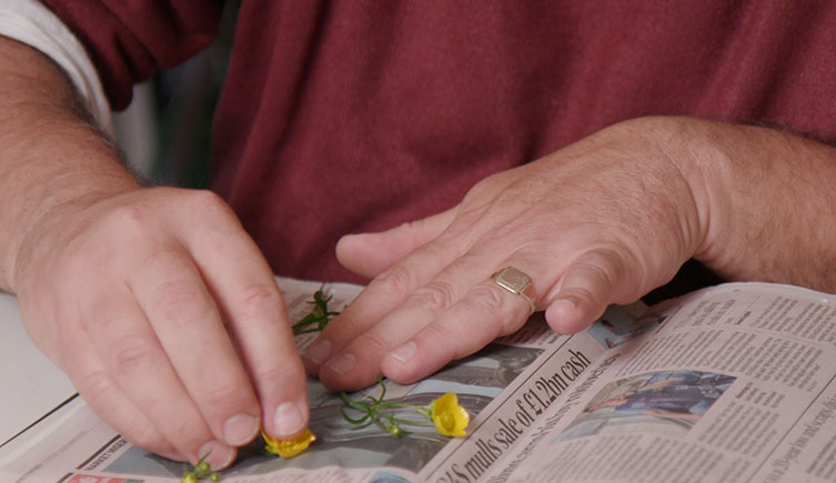 Placing flowers on newspaper to be pressed