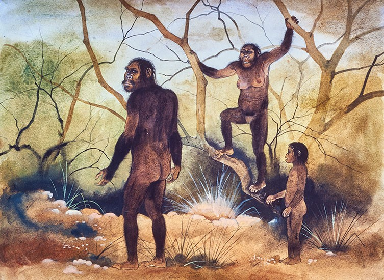 Australopithecus afarensis, Lucy's species | Natural History Museum