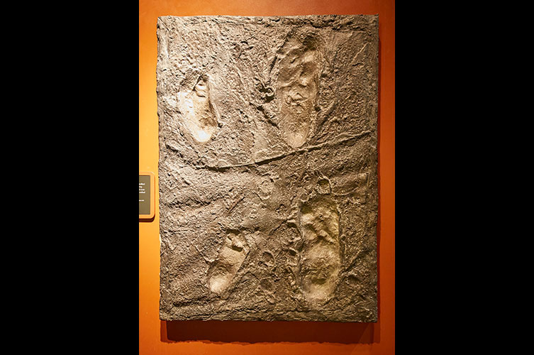 Replica of some of the Laetoli footprints
