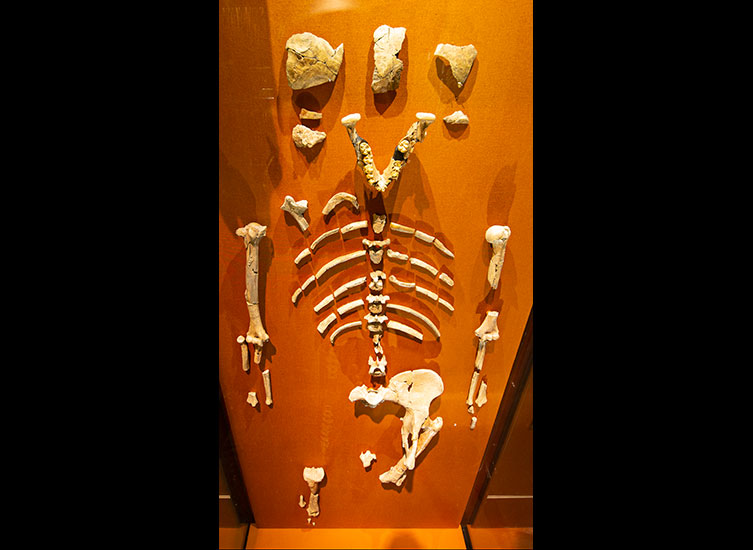 Lucy in the Museum's Human Evolution gallery