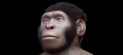 Palaeoart reconstruction of Homo naledi's face