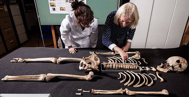 Museum staff studying the Cheddar Man skeleton