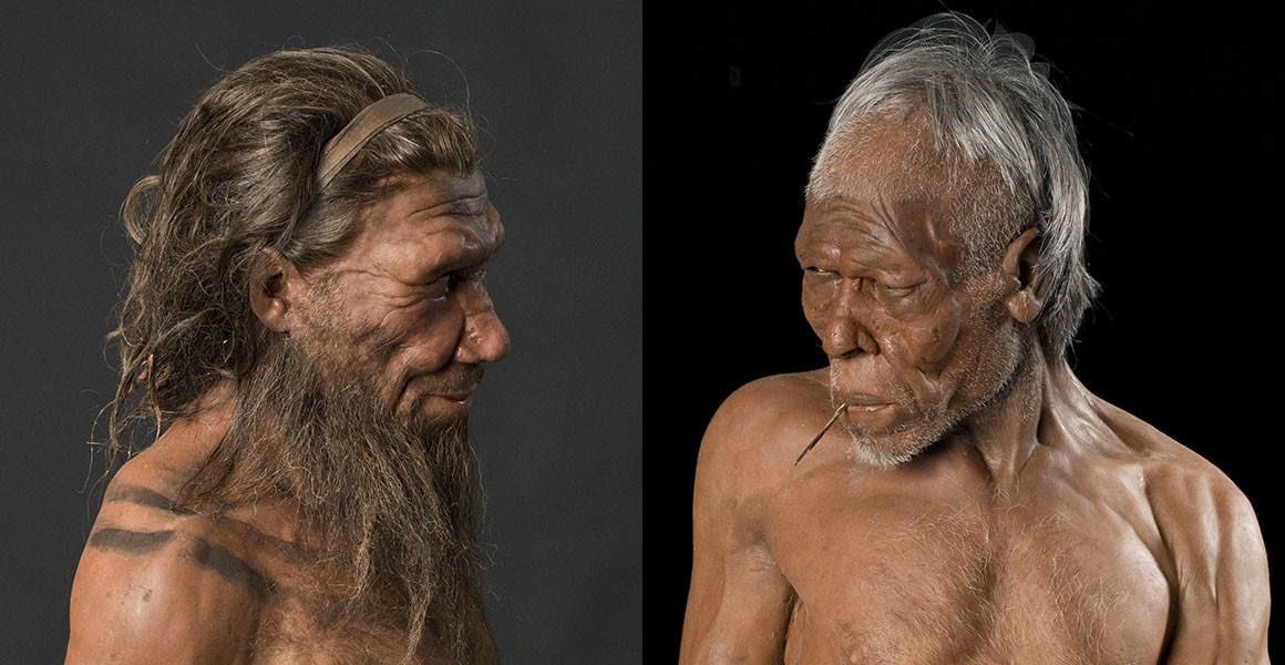 Are Neanderthals the same species as us? | Natural History Museum