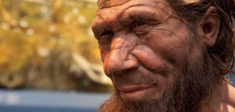 Reconstruction of a Neanderthal gazing into the distance