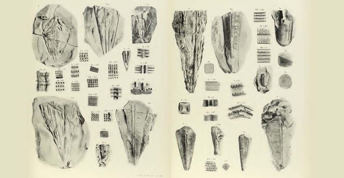 A black and white photo of a series of drawings