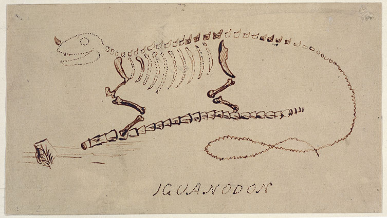 An early drawing of Iguanodon