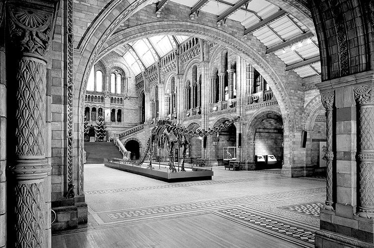 Diplodocus skeleton on display in the Central Hall