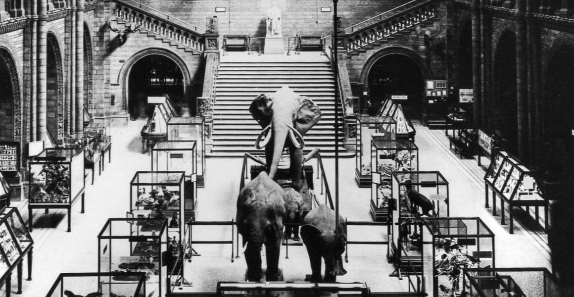 Image result for nhm george the elephant