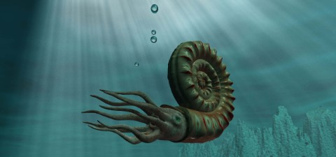 An artist's impression of a living ammonite