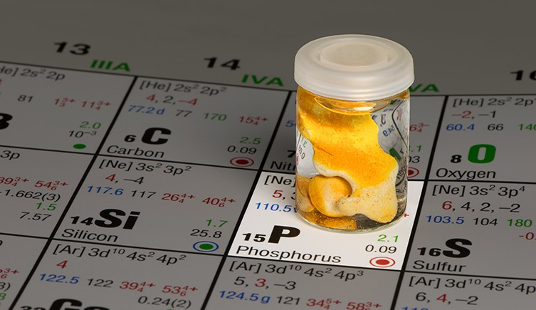 El fósforo es un elemento vital en las membranas celulares.