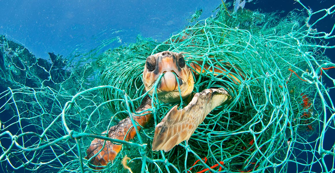 Turtle trapped in net