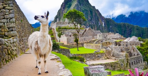 Microorganisms in llama poop can help date the rise and fall of the Inca Empire