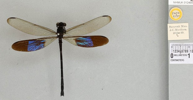 Insects | Natural History Museum