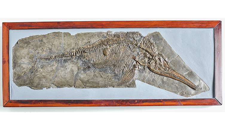 The first ichthyosaur Mary Anning found