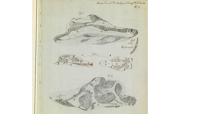 Mary Anning's sketch of a skull