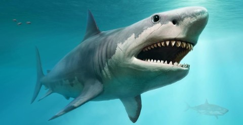 A computer generated image of a megalodon shark