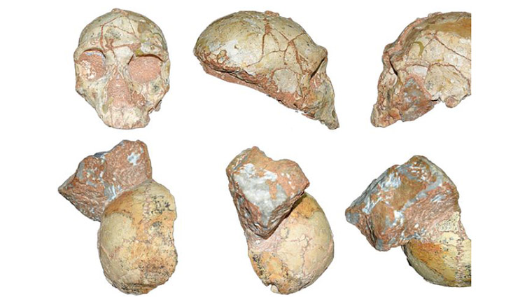 The Apidima 1 and 2 skull fragments