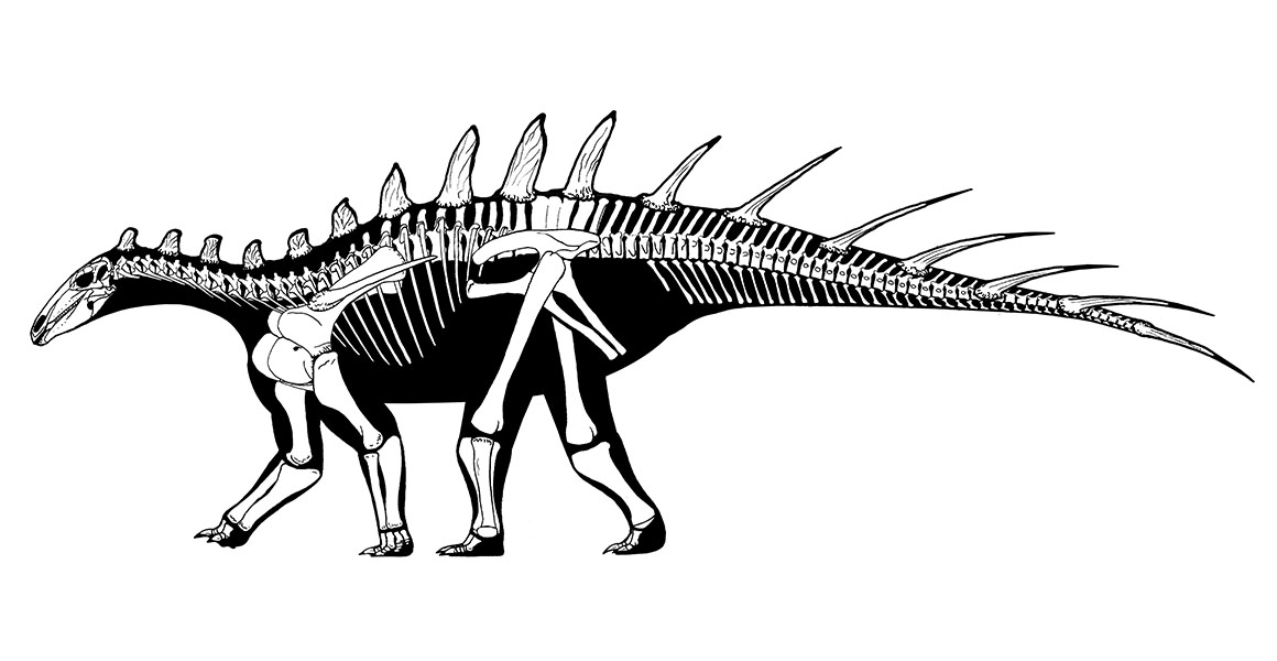 The oldest stegosaur ever has been discovered in Morocco