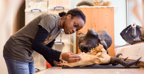 Nadine Gabriel works with fossils in the lab.