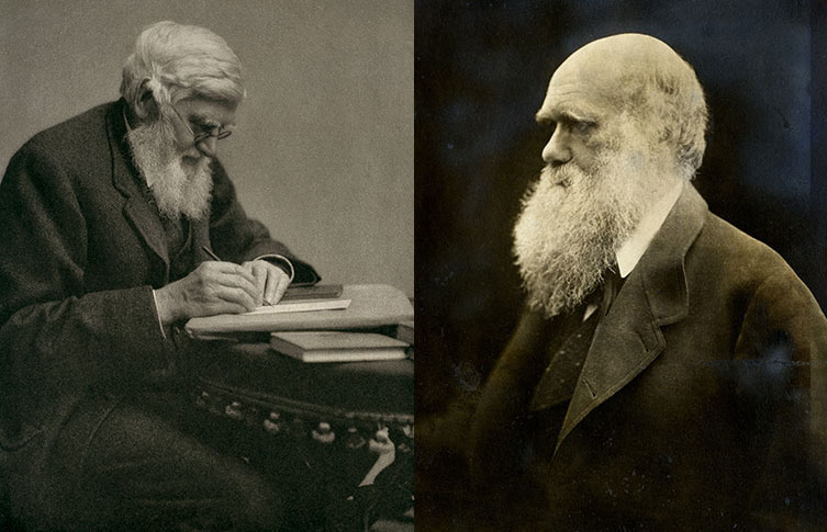 Portraits of Alfred Russel Wallace and Charles Darwin