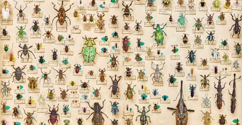 A collection of curculionid beetles