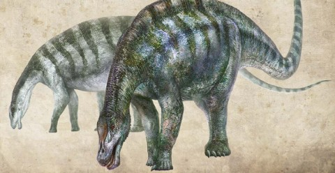 An artist's impression of new species of dinosaur found in China