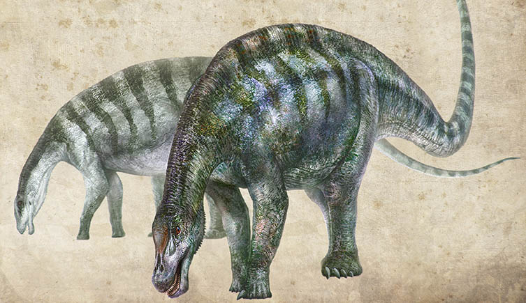 New species of suaropod dinosaur found in China