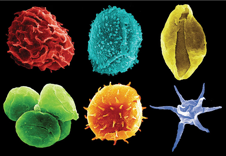 False-colour scanning electron microscope images of fossil pollen, spores and plankton.