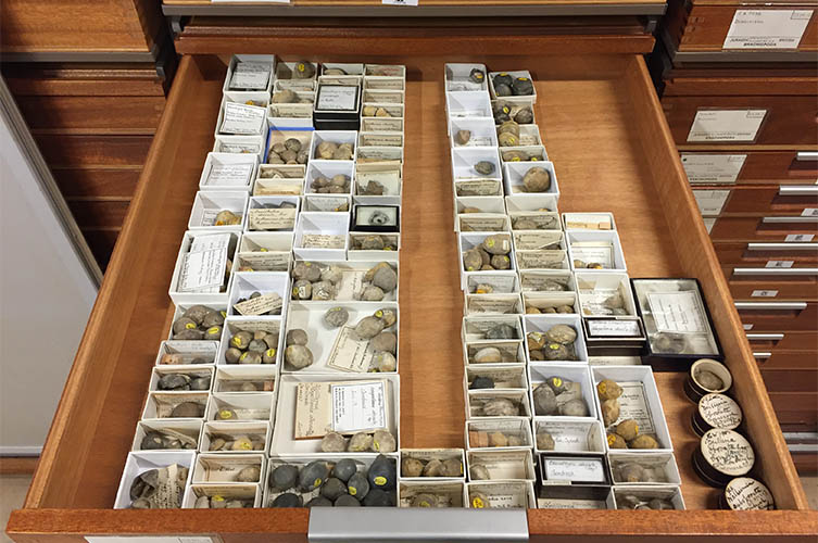 A drawer full of specimens