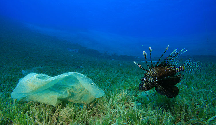 A lionfish and ocean plastic