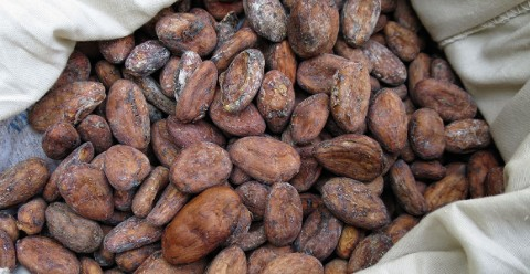 Farmed cocoa beans removed from their pods and flesh