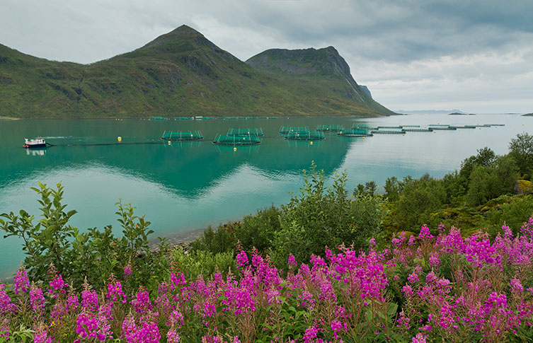 A fish farm in a Norwegian fjord