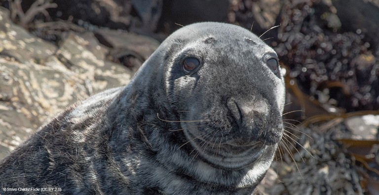 Searching For Plastic In The Belly Of A Seal
